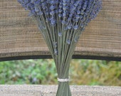Dried French Lavender bundle 10-12 inch tall