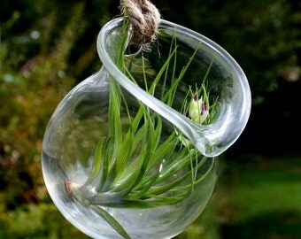 hanging jug style hand blown glass plant terrarium