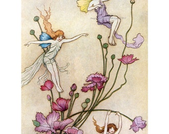 Flower Fairy Print- Fairies Play on Pink Flowers - Warwick Goble