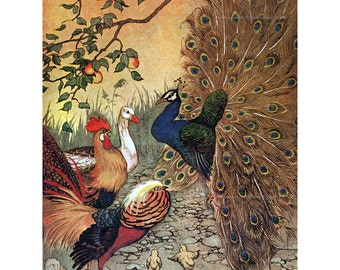 Peacock Greeting Card   Aesops Fables Illustration   Chickens Pheasant Goose