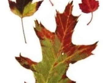 Oak And Maple Leaves Original Watercolor Painting