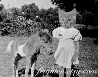 Cat and Pony Art, Black and White Art, Mixed Media Collage, Cat and Horse Art, Anthropomorphic Art, frighten