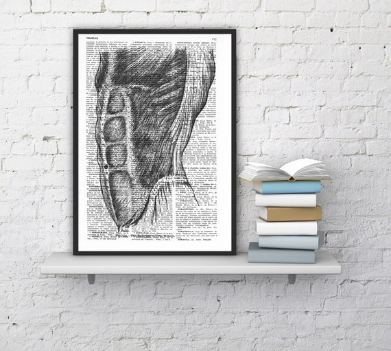 Summer Sale Wall art Abdominals dictionary Print- Science prints wall art- Anatomy Gift wall art,Giclee print Muscles decor SKA026