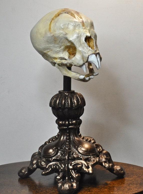 https://www.etsy.com/listing/108908151/nosferatu-fetal-skull-display?ref=favs_view_21&atr_uid=13225884