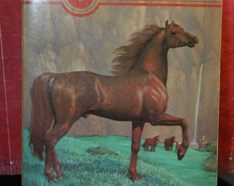 The Island Stallion by Walter Farley vintage 1976 young adult  Black Stallion Series paperback novel