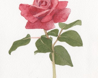Red Rose 3 5 x 7  Original Watercolor