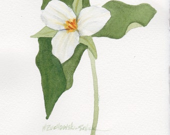 Single White Trillium 5 x 7 Original Watercolor