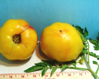 Pineapple Heirloom Tomato Seeds  Non GMO
