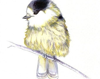 """Little Yellow Birdie: Digital print of an original drawing available 5x7"""" or 8x10"""""""