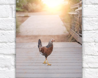 Hen Photo Farm Animal Print Chicken Wall Art Kitchen Art Farmhouse