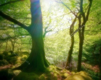 Dreamy Tree Photography Print, Ethereal Trees in Angelic Light Art Print, Peaceful Sunlit Woodland Wall Decor, Calming Magical Green Trees