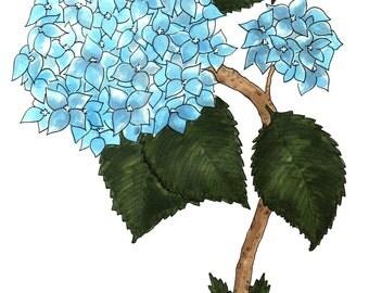 Blue Hydrangea Illustration Art Print