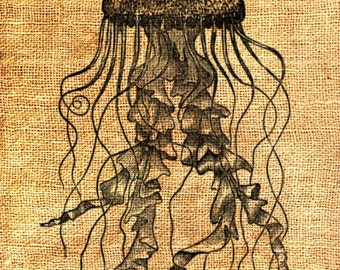 Jellyfish Jelly Fish Ocean Sea Life Vintage Printable Image INSTANT Download Digital Antique Clip Art Transfer Art Print jpg jpeg png V108