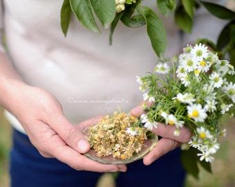 Natural Chamomile, wild chamomile, Wild Chamomile herbal Tea from Mountain Parnonas, Sparta Greece,