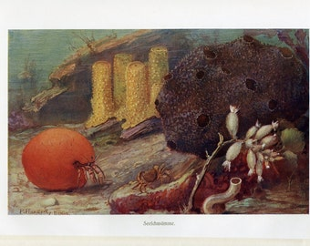 Under the Sea Art Print - Antique Lithograph C.1900 Germany - Crab, Crustaceans, Ocean Floor, Marine Life - Wall Art, Home Decor, Gift