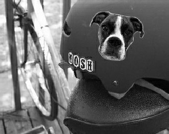 Your Pooch On A Bike Helmet