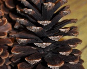 Large Pine Cones (20)
