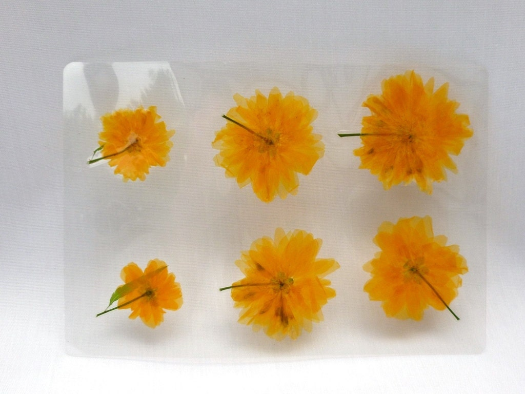 Pressed laminated flowers yellow diy real dried