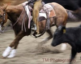 Cutting Horse, Cutting Horse Photography, Horse Photography, Action Photography, Fine Art Photography, Equine Art, Western Horse