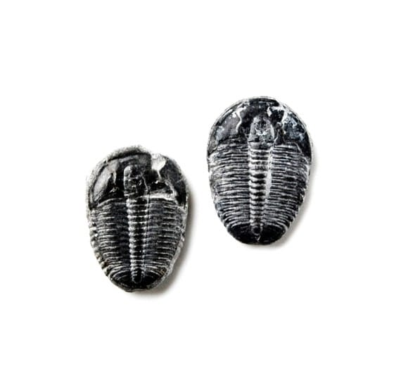 Trilobite Fossil Cufflinks Set, Genuine, Gift Box Included, Guaranteed