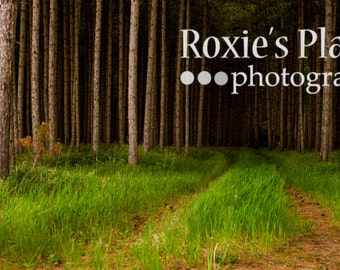 Outdoor photography 10 x 20 print Into the Woods