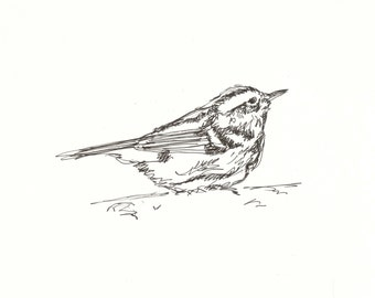 Warbler Original Pen & Ink Bird Drawing 8x10 - Animal Art, Bird Art, Nature, Line Drawing