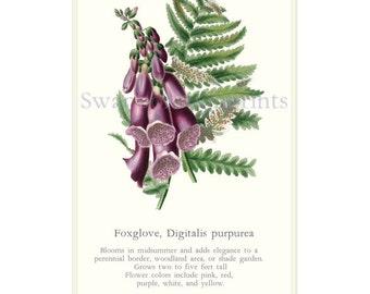 Botanical Cottage Garden Art Print Foxglove and Fern Garden Flower Print. Foxglove Woodland Plant Gardening Gift. Digitalis Heart Remedy