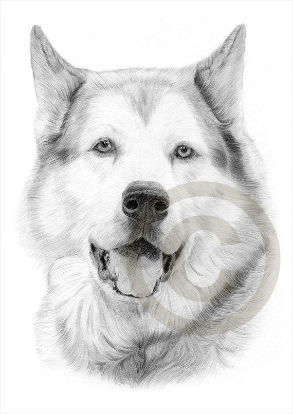 Conosciuto Matita di Alaskan Malamute cane disegno opera di formato A4 QF17