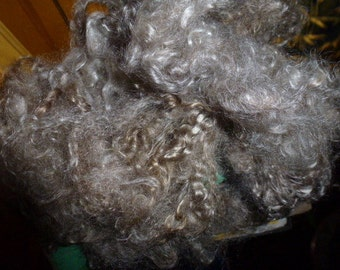 Natural Grey Blanketed Mohair Locks Two Ounces Spinning Carding Spinning