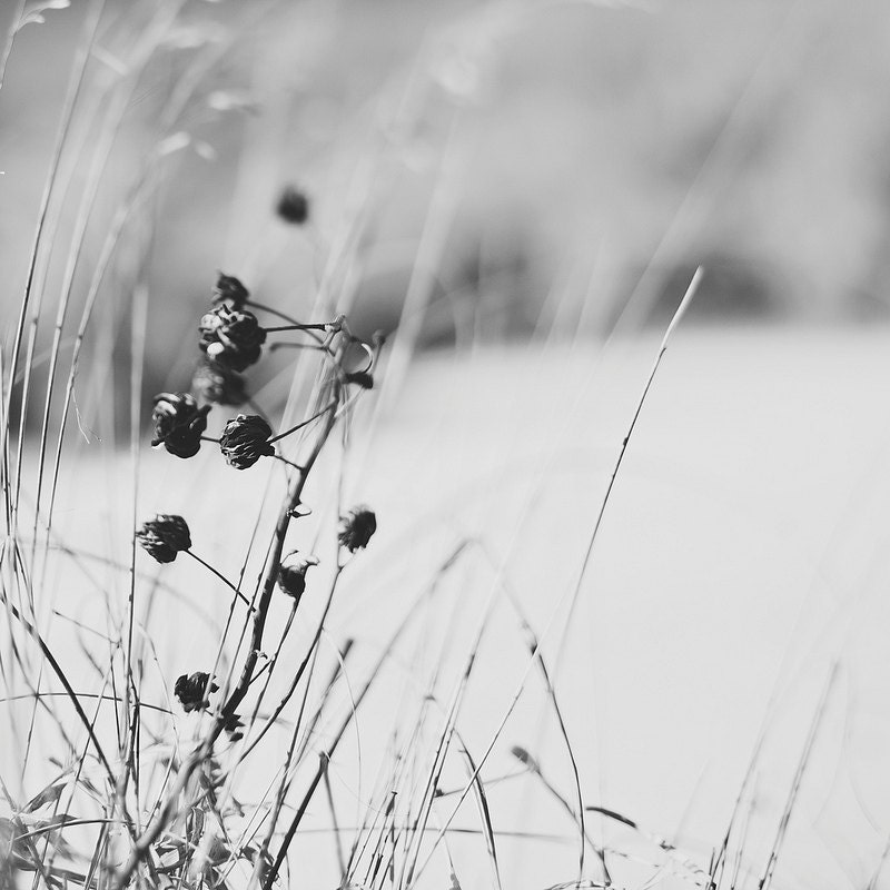 Kansas winter pods gallery32 etsy fine art photographer