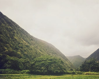 "Hawaii Big Island Mountain Valley and Trees, Landscape Photography, Lush Nature, Tropical, Green, Mist - ""A Valley So Deep"""