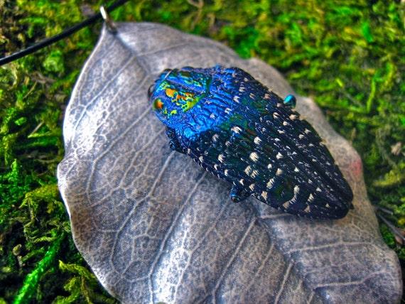 Blue Rainbow Jewel Beetle, Polybothris sumptuosa gema ...