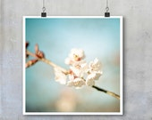 Flower Photograph Pale Pink Blue Cherry Blossom floral home decor flower nature art blue sky spring summer square big print poster gift her