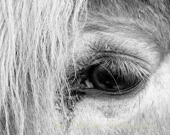 Black & White Horse photography, Farm animal portrait, horse's eye, Horse print, Rustic country wall art, equine wall art 11x14, 8x10 matted