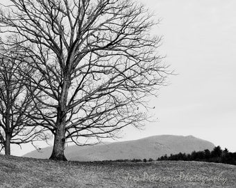 Mountain Tree Photography Black & White Home Decor, Asheville NC Art, Tree landscape photography. striking wall art 8x12 Fine Art Photograph