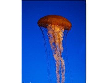 Cnidarian In The Sea Jellyfish Orange Blue Beach Cottage Decor Jellyfish Beach Pillow Sea Ocean Life