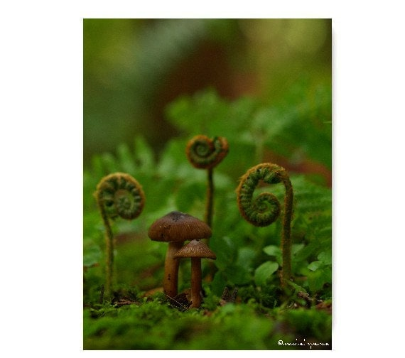 Mushrooms And Ferns Photograph Woodland Fungi Ferns In The Forest Magical Forest Green Ferns Mushroom Print