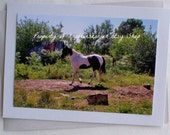 Photo Card Horse Paint
