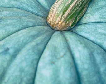 Blue pumpkin photography harvest home decor jack o lantern autumn Monaco blue fall halloween decoration - Teal Pumpkin photograph