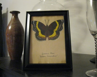 Yellow and Brown Butterfly Painting - Soldier Commodore on Tea stained paper
