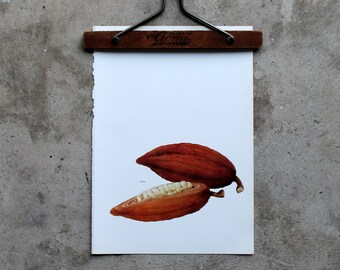 Vintage Book Page, Cocoa Beans, 1965, Book Plate