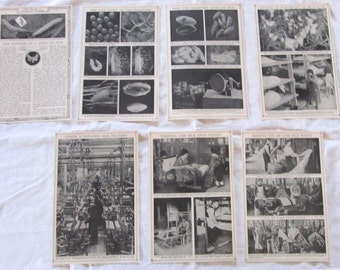 "SILK & ITS STORY --  antique prints of the silk fabric process--  from ""Book of Knowledge"" 1912 --7 sheets/14 pages"