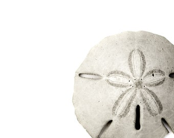 Sand Dollar Black White Coastal Home Decor Minimal Print Sea Life