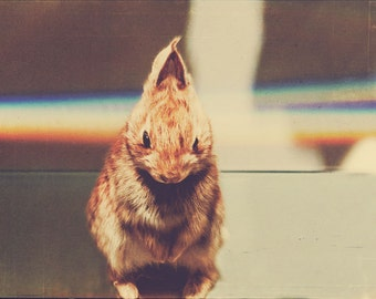 Nature Photography, Baby Rabbit Photo, Brown, Bunny Photo, Rainbow Photo, Taxidermy Rabbit Photo, Hipster Art, Retro Colors, Cute Bunny
