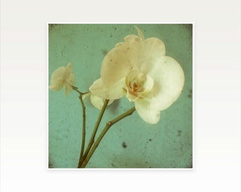 Orchid Photography, Flower Art Print - Morning Glory