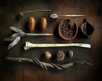nature photography - 8 X 10 still life photograph with found seedpods, bones and dried fruit
