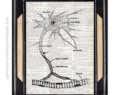 NEURON CELL art print human anatomy medical science on upcycled vintage dictionary text book page brain cell nucleus illustration 8x10, 5x7