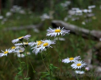 Nature, Gentle Floral, Gentle Wild Flowers, Wild Flowers, Mountain Flowers, Floral Art, Fine Art Photography