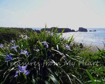 Fine Art Photograph Bandon Coast and Wild Irises