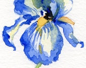 BLUE IRIS ACEO small original watercolor on heavy watercolor paper by Winifred Spivey new  painting